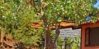 albero-pistacchior